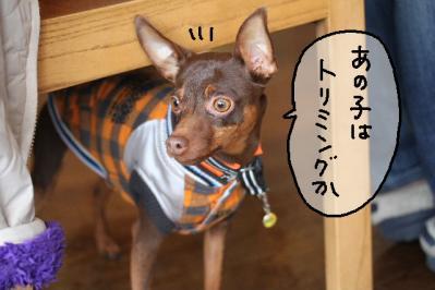 2012_02_25_9999_19.jpg