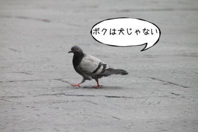 2012_02_29_9999_326.jpg