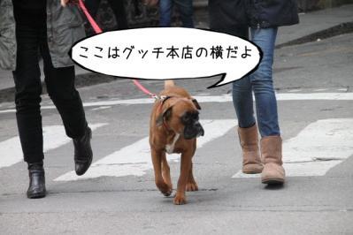 2012_02_29_9999_357.jpg
