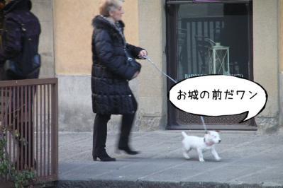 2012_03_01_9999_12.jpg