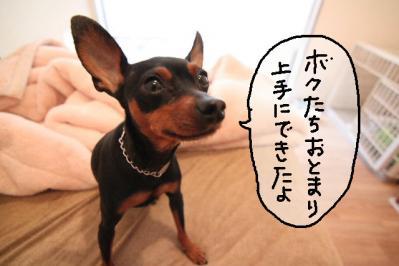 2012_03_05_9999_1.jpg