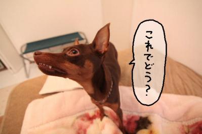 2012_03_05_9999_27.jpg