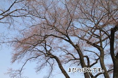 2012_04_08_9999_30.jpg
