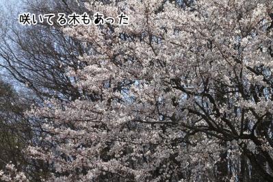 2012_04_08_9999_32.jpg