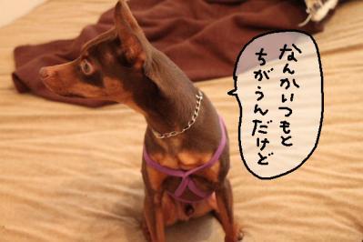 2012_04_21_9999_1.jpg
