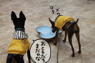 2012_05_04_9999_12.jpg