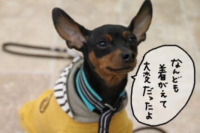 2012_05_04_9999_6.jpg