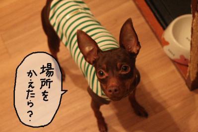 2012_05_15_9999_1.jpg
