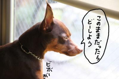 2012_05_17_9999_12.jpg