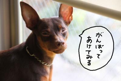 2012_05_17_9999_13.jpg