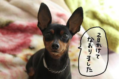 2012_05_17_9999_4.jpg
