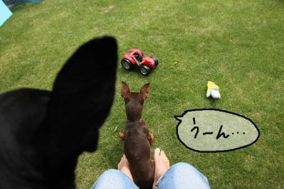 2012_05_20_9999_15.jpg
