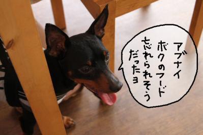 2012_05_20_9999_31.jpg