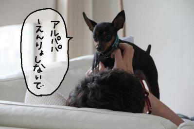2012_05_20_9999_56.jpg