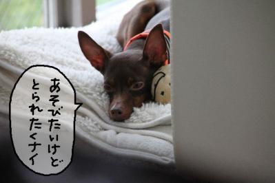 2012_05_20_9999_58.jpg