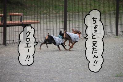 2012_05_26_9999_63.jpg