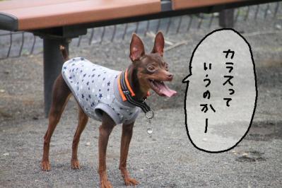 2012_05_26_9999_82.jpg