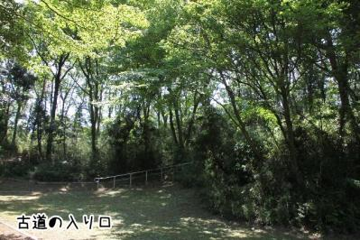 2012_05_27_9999_22.jpg