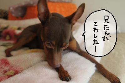 2012_06_17_9999_13.jpg