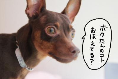2012_06_17_9999_3.jpg