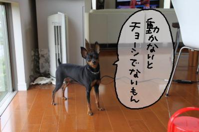 2012_07_22_9999_10.jpg