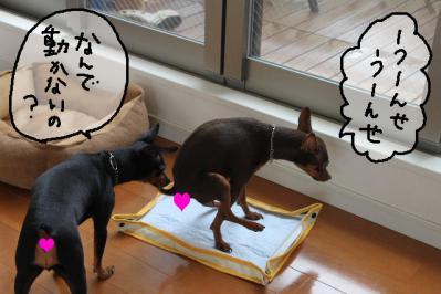 2012_07_22_9999_2.jpg