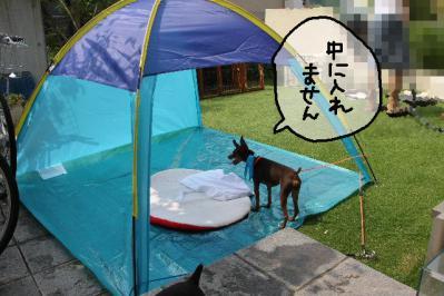 2012_07_28_9999_5.jpg