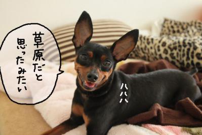 2012_10_02_9999_8.jpg
