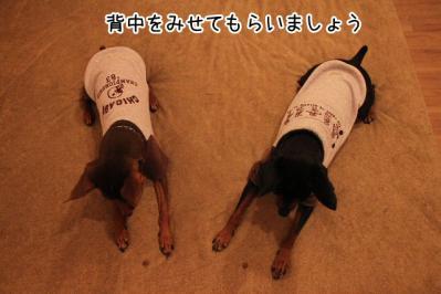 2012_10_08_9999_20.jpg