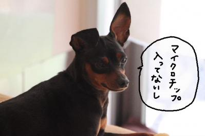 2012_10_11_9999_12.jpg
