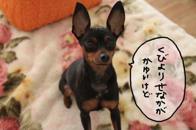 2012_10_11_9999_3.jpg