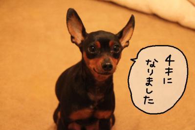 2012_10_15_9999_9.jpg