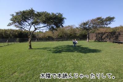 2012_10_21_9999_79.jpg