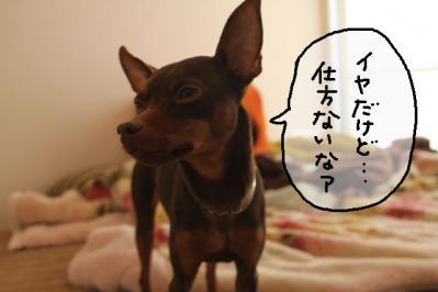2012_11_08_9999_3.jpg