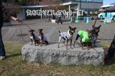 2012_11_18_9999_107.jpg