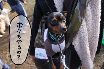 2012_11_18_9999_13.jpg