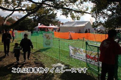 2012_11_18_9999_40.jpg
