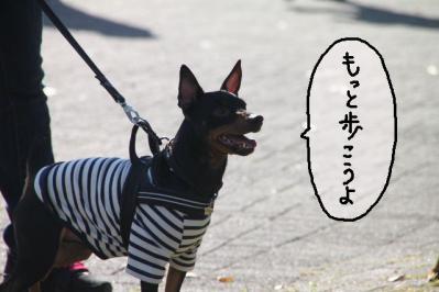 2012_11_18_9999_90.jpg
