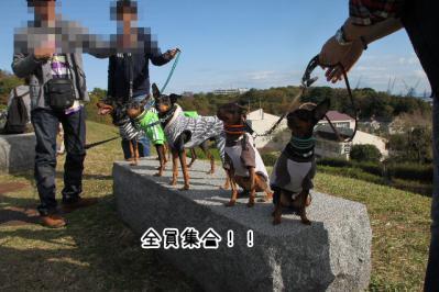 2012_11_18_9999_97.jpg