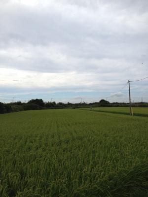 14日 散歩_convert_20120818121453
