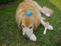ボール(2)