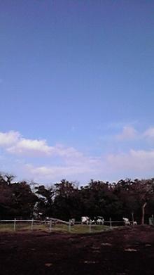 nobu's diary-2012032415410000.jpg