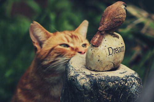 cat-saturday-271_201311271501263e3.jpg