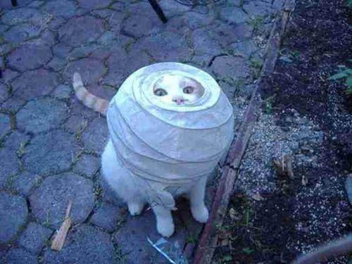cat-saturday-34_20131127145840293.jpg