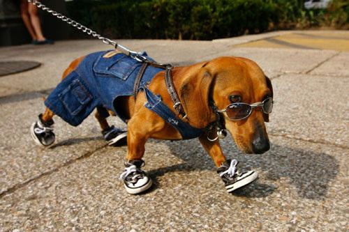 dem-doggone-dogs-06.jpg