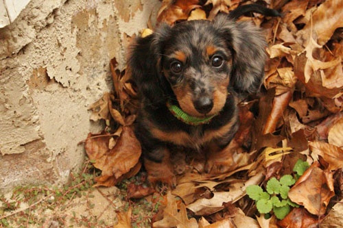 dem-doggone-dogs-28.jpg