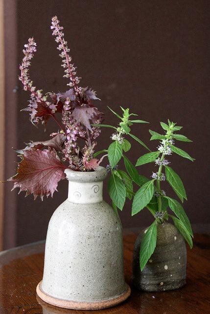 シソ科の花2種100926