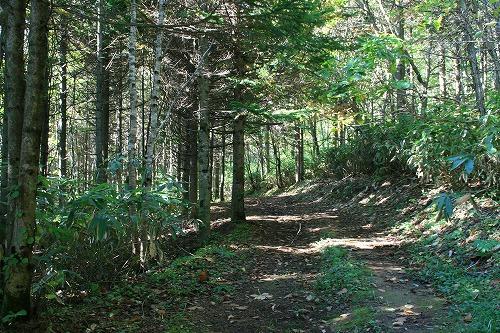 樹林帯101011