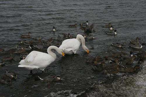 ウトナイ湖101211