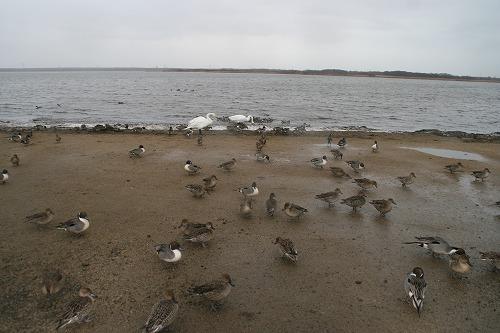 ウトナイ湖101211p2
